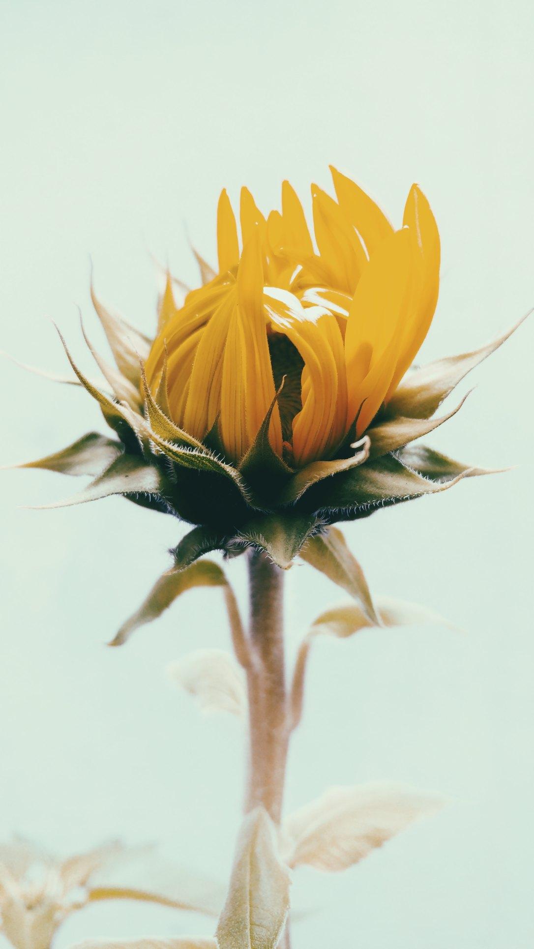 lucas-silva-pinheiro-santos-323448-unsplash